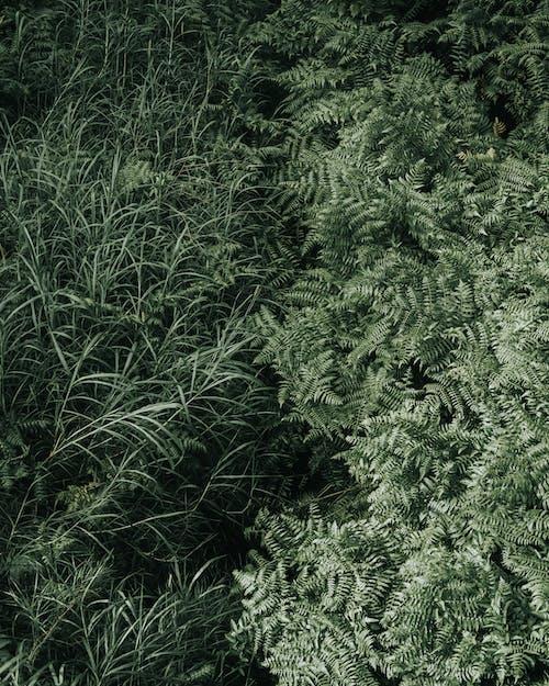 Безкоштовне стокове фото на тему «великий план, Гаваї, дерева, зелена папороть»
