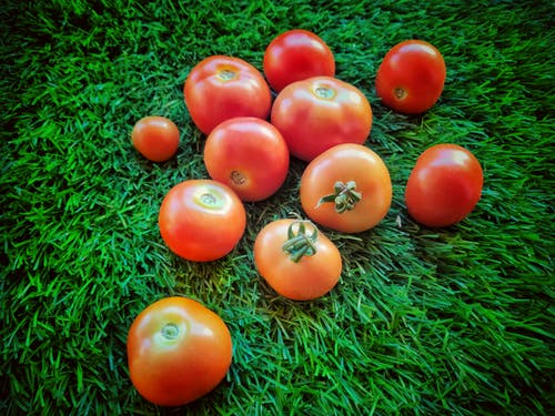 Free stock photo of cherry tomato, fresh, fresh vegetables, green
