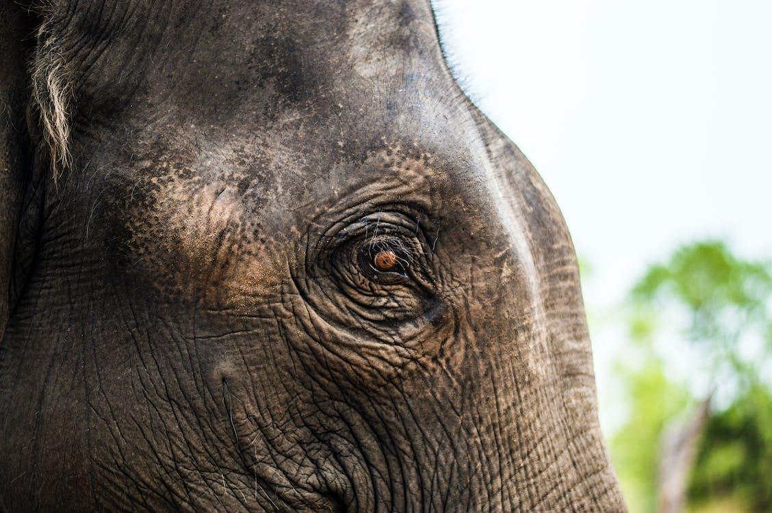 Close Up Photo of Elephants Eye