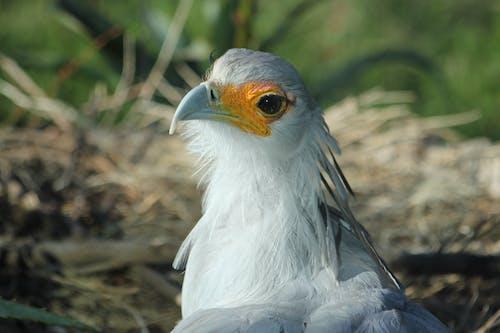 Kostnadsfri bild av bo, fågelbo, natur