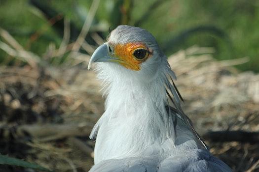 Free stock photo of nature, bird, bird's nest, nest