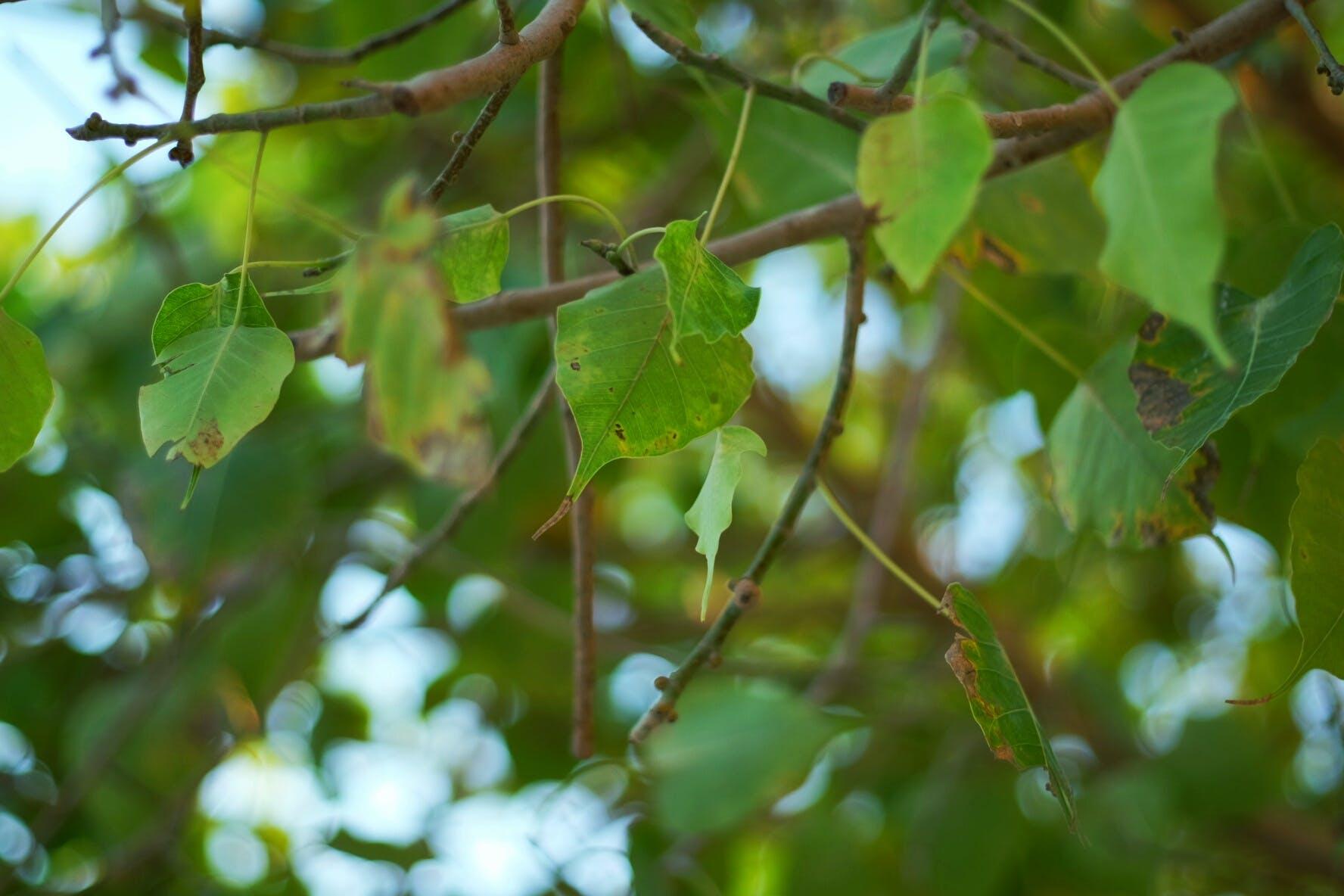 Foto profissional grátis de árvore, árvores