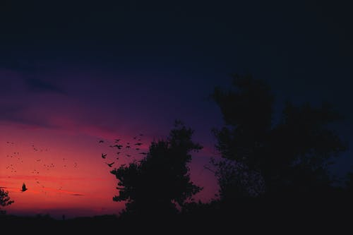 ağaç, gökyüzü, gölge içeren Ücretsiz stok fotoğraf