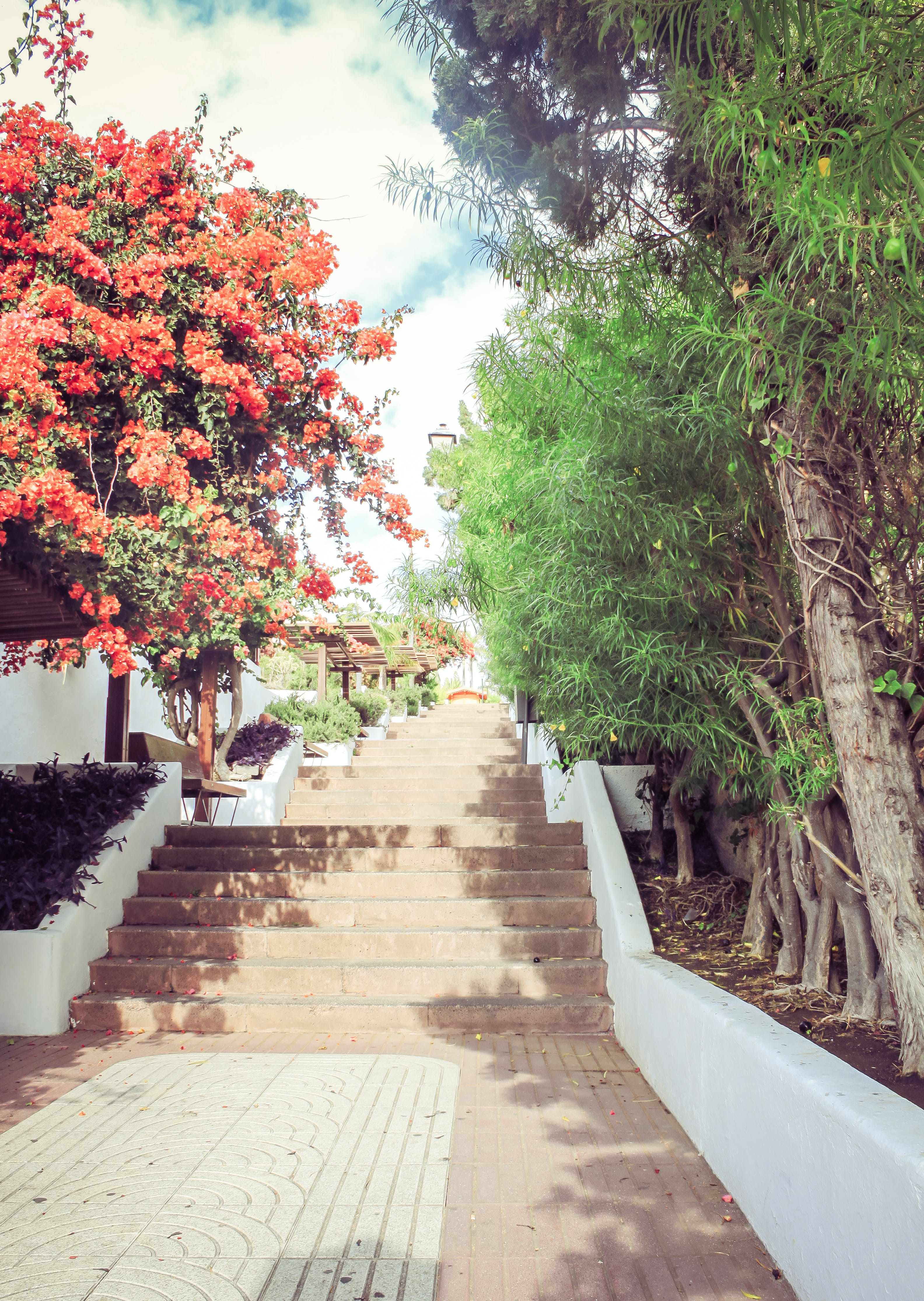 Free stock photo of architecture, building, flowers, stairs