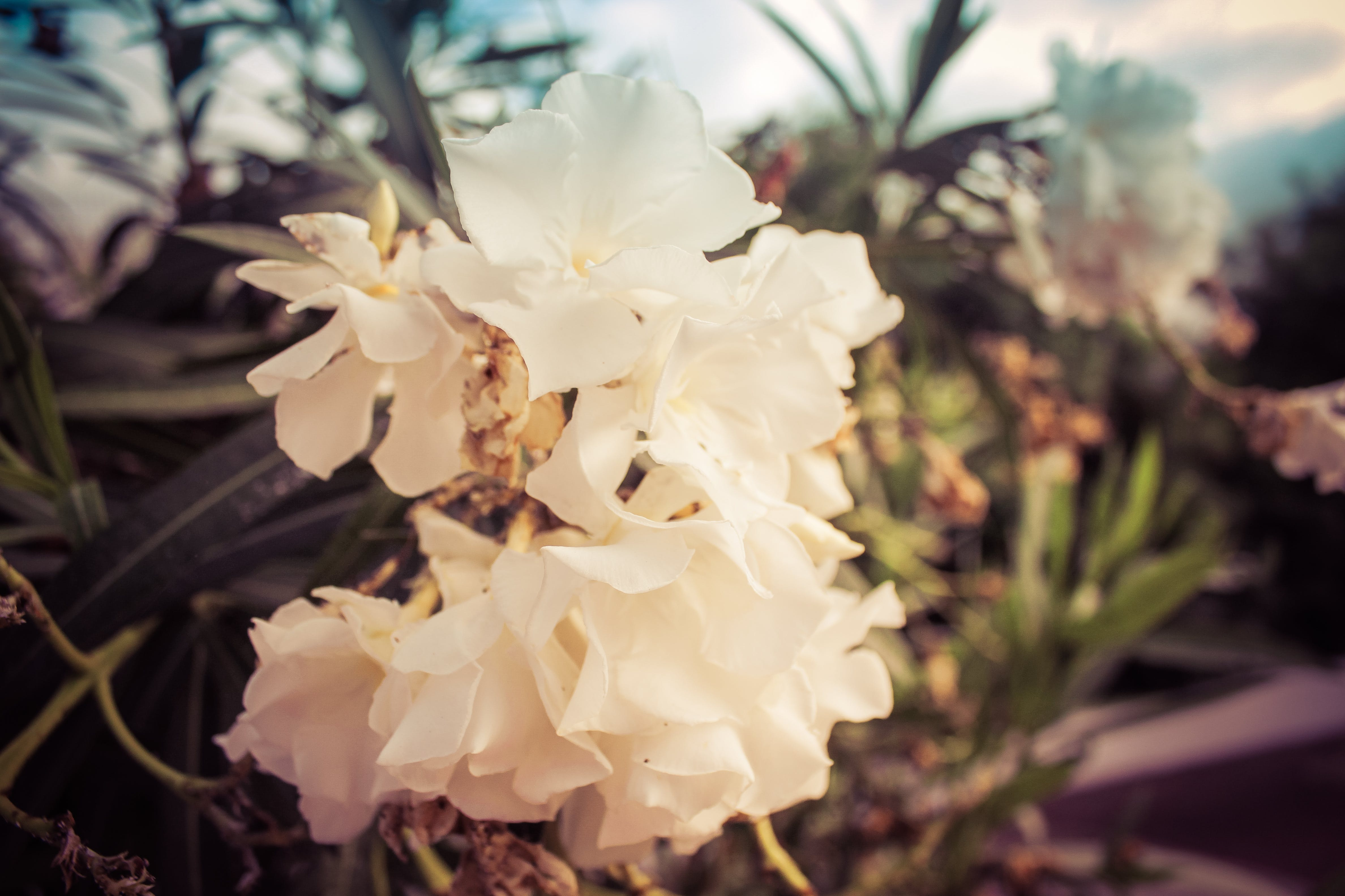 Free stock photo of beauty, blossom, flowers, nature