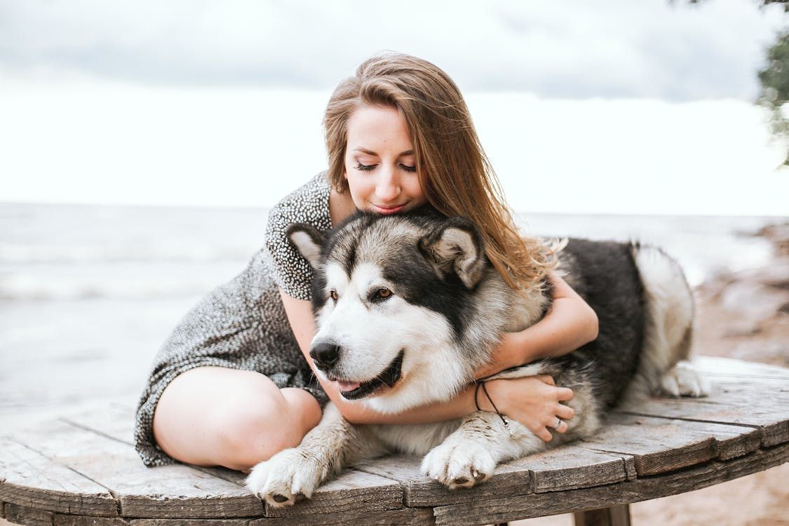 Woman in Gray Dress Hugging Black and White Siberian Husky Puppy