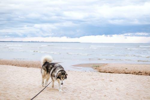 Photos gratuites de animal, bord de mer, chien, ciel