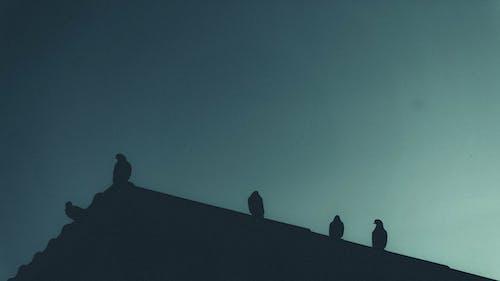 Бесплатное стоковое фото с голуби, расстроенный