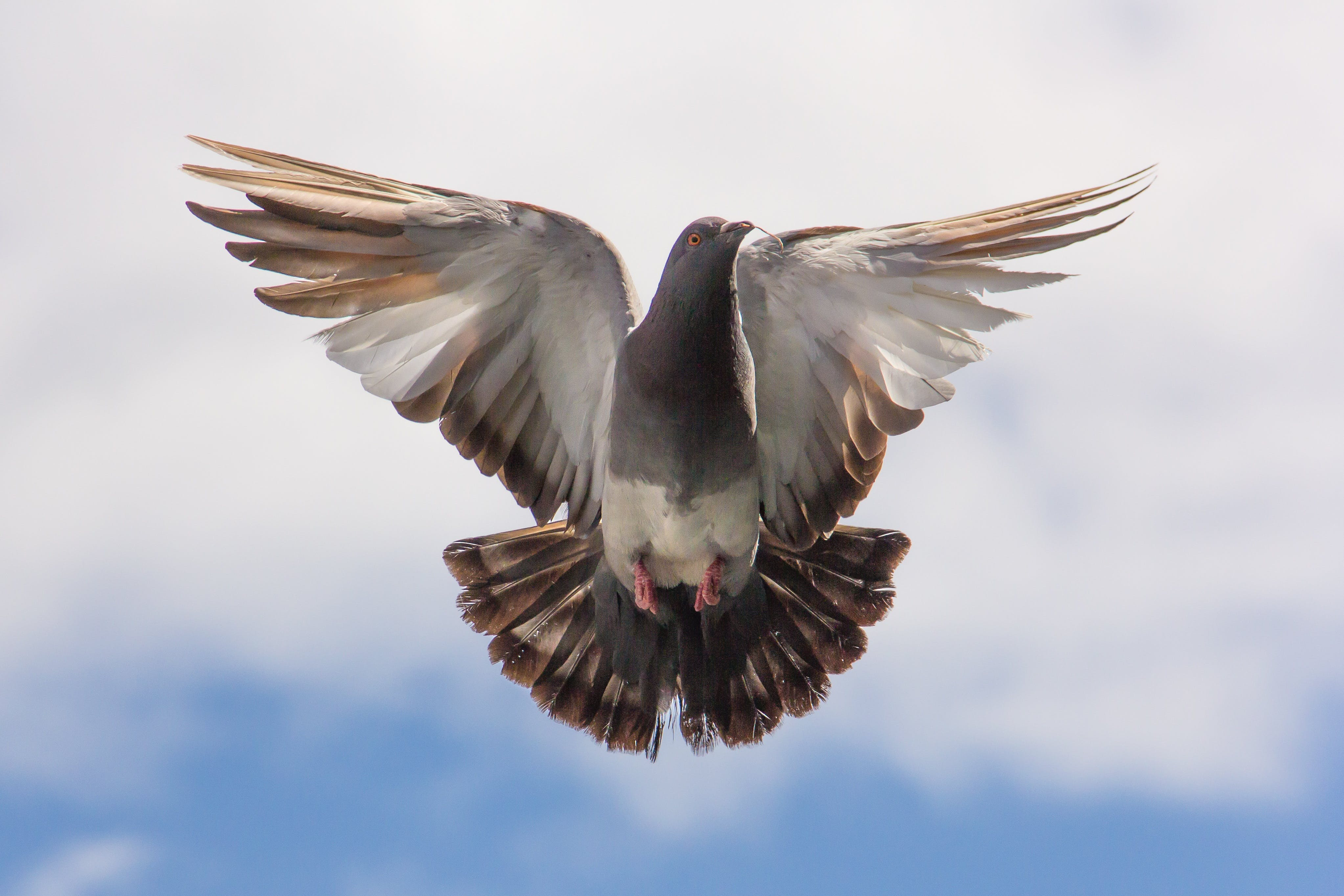 Brown and White Flying Bird on Blue Sky