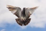 flight, bird, flying