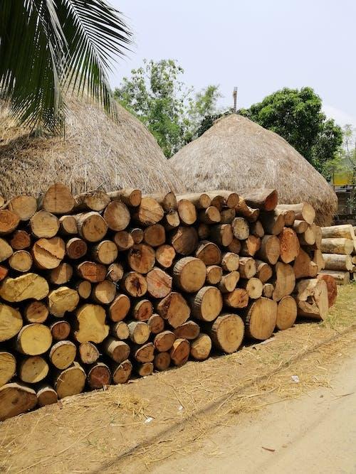 Foto profissional grátis de árvores, cabana do nipa, casca, cortado