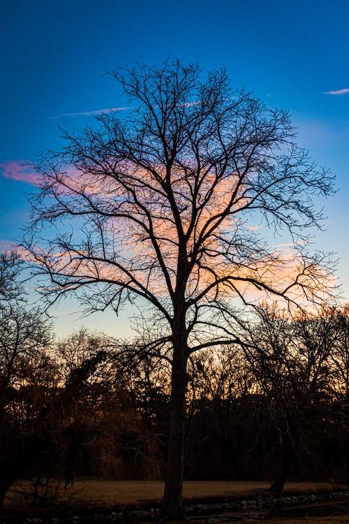 Kostenloses Stock Foto zu bäume, blaue himmel, blauer himmel