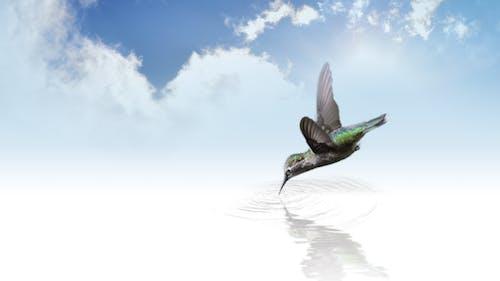 Gratis lagerfoto af dyr, kolibri
