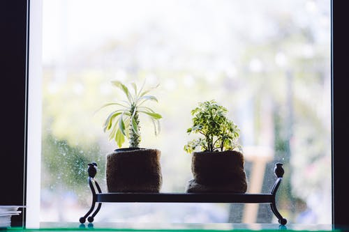 Green Leafed Plants Near Window
