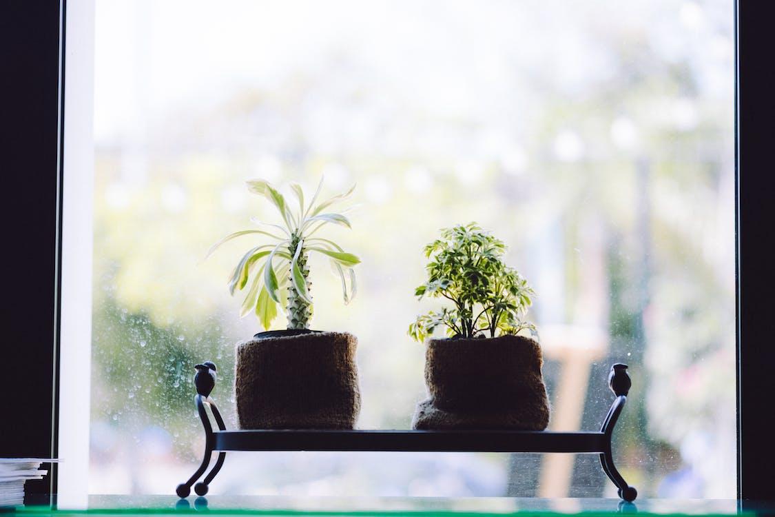 Green Leafed Plants Near Window