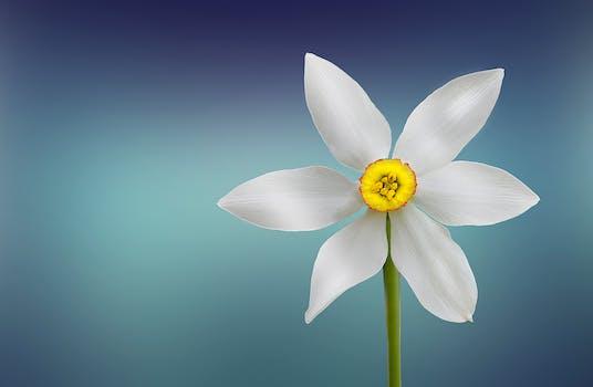 بستان ورد المصــــــــراوية - صفحة 2 Flower-beautiful-beauty-bloom