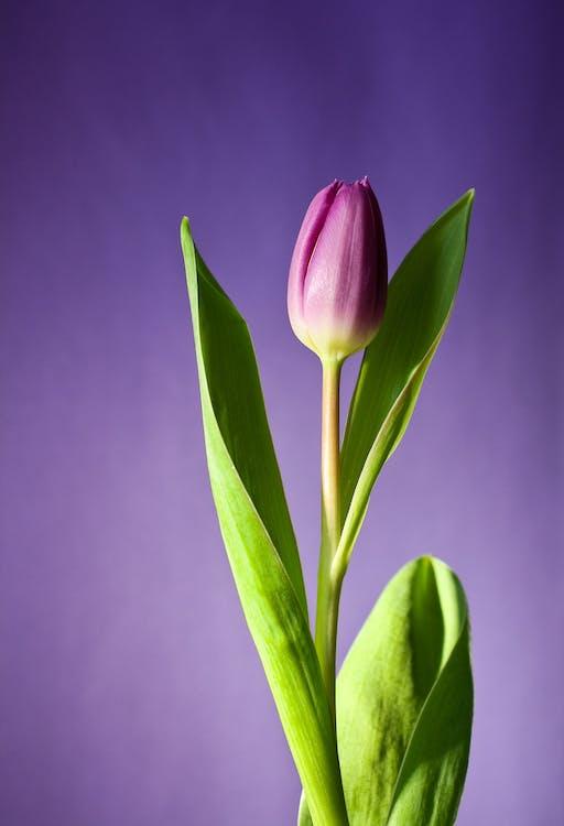 fleur, fleurir, flore