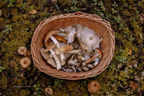 Imagine de stoc gratuită din alegerea ciupercii, baza pădurii, ciupercă, ciuperca de iarnă