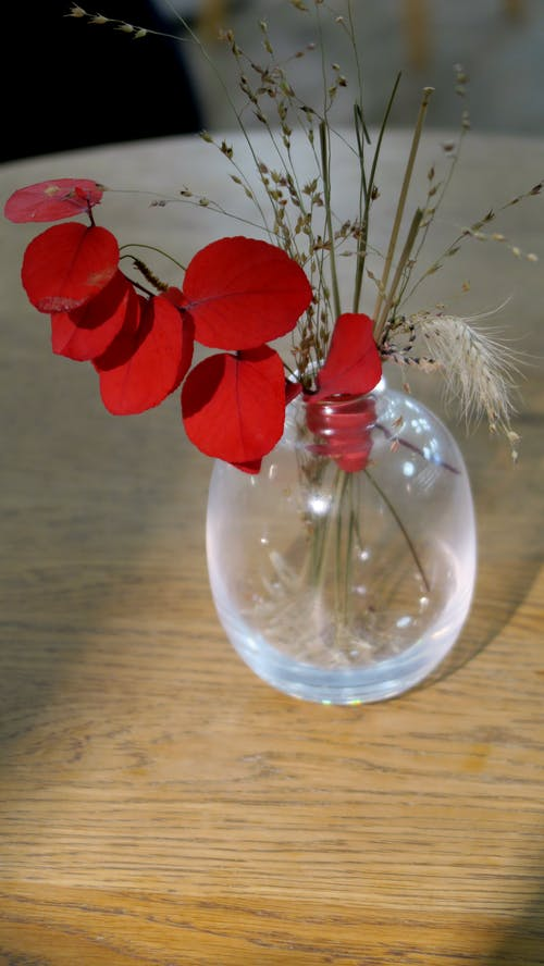 Free stock photo of flower, flower vase, leaf, red