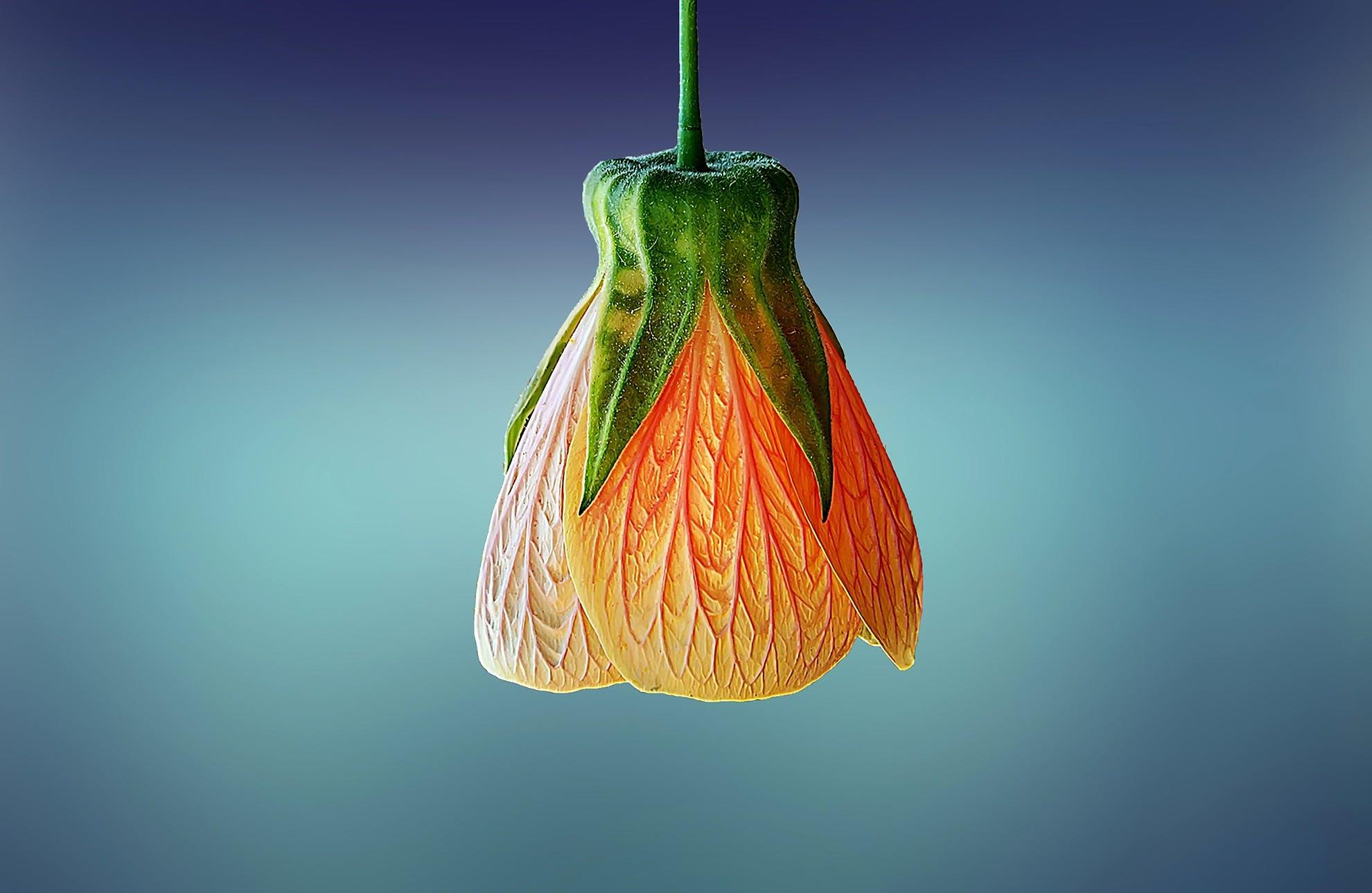 Close-up Photography of Orange Flower Bud