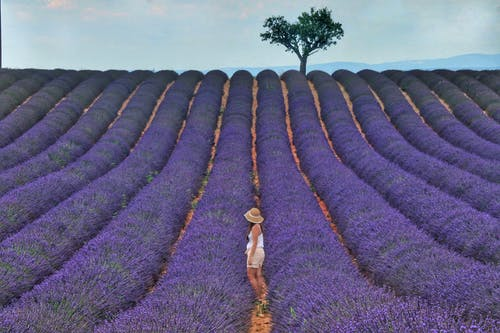 Woman in White Shirt and Brown Skirt Standing on Purple Flower Field