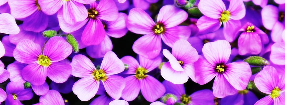 New free stock photo of flowers, purple, petals