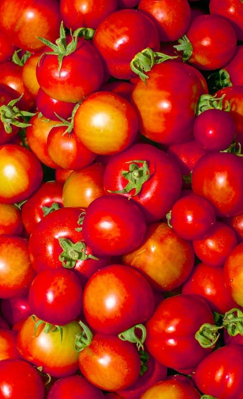 #トマト#トマト#フルーツ#壁紙#電話#ニコンの無料の写真素材