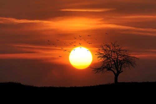 Flock of Birds Flying over Bare Tree Overlooking Sunset