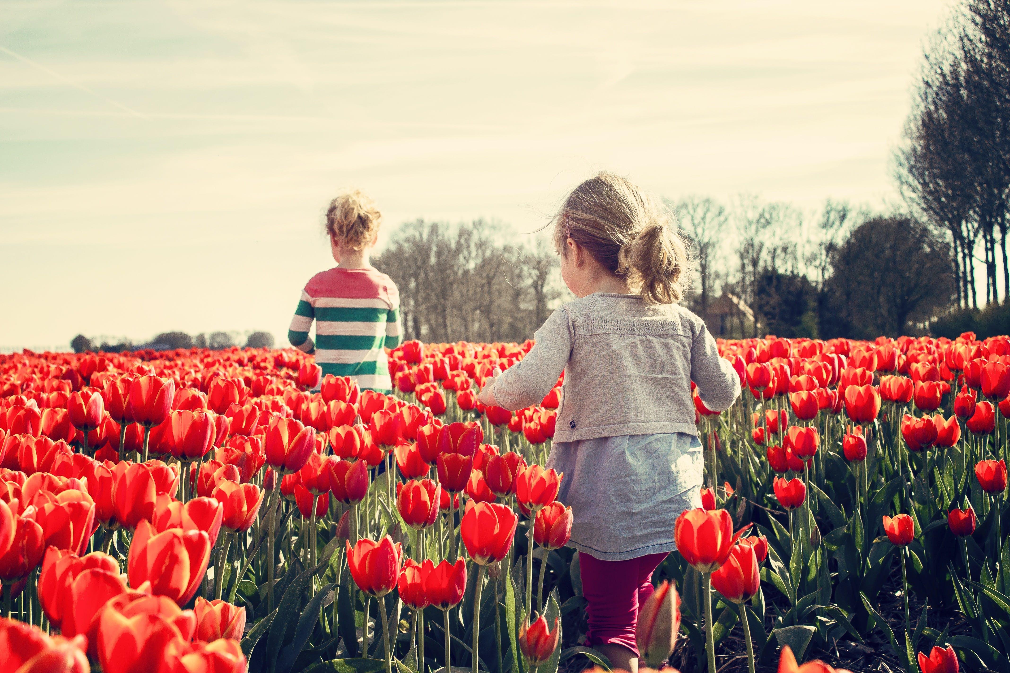 2 Kids Walking on Red Tulip Garden Under Blu Sky