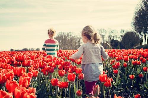 Fotobanka sbezplatnými fotkami na tému deti, flóra, HD tapeta, kvet ovocného stromu