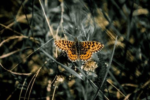 Základová fotografie zdarma na téma hmyz, makro, motýl, tráva
