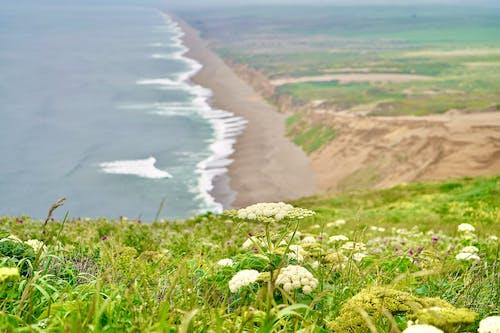 Free stock photo of beach, beach waves, flowers