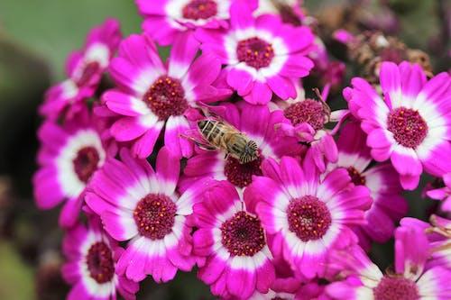 Imagine de stoc gratuită din floră, flori, flori roz, frumos