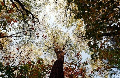 Δωρεάν στοκ φωτογραφιών με γαβγίζω, δασικός, δέντρα, εποχή