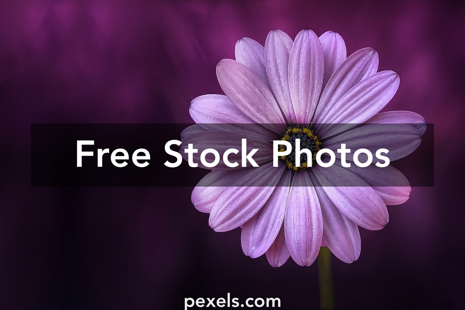 Flower Images Pexels Free Stock Photos