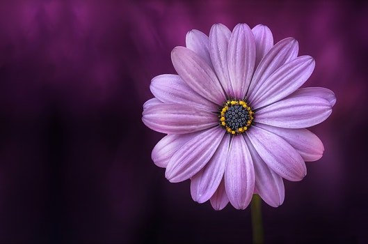 Free stock photo of nature, purple, petals, plant