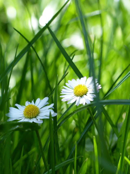 Yellow and White Flower Surrounded by Green Grass