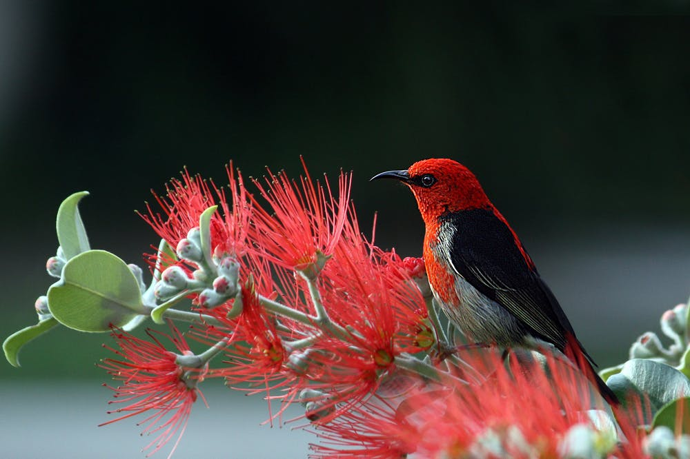 A bird perching on red flowers.   Photo: Pexels