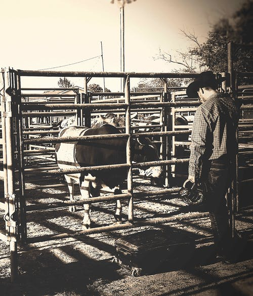 Free stock photo of bull, bull rider, country, cowboy