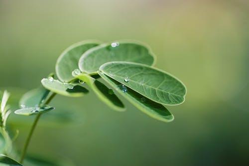 Free stock photo of garden, green, leaf, macro