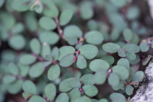 Free stock photo of flowers, garden, green, leaves