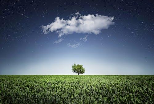 ağaç, alan, arazi, bitkiler içeren Ücretsiz stok fotoğraf