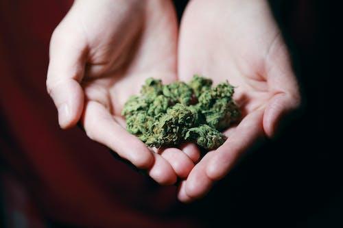 Gratis stockfoto met alternatief medicijn, ander medicijn, beter maken, blad
