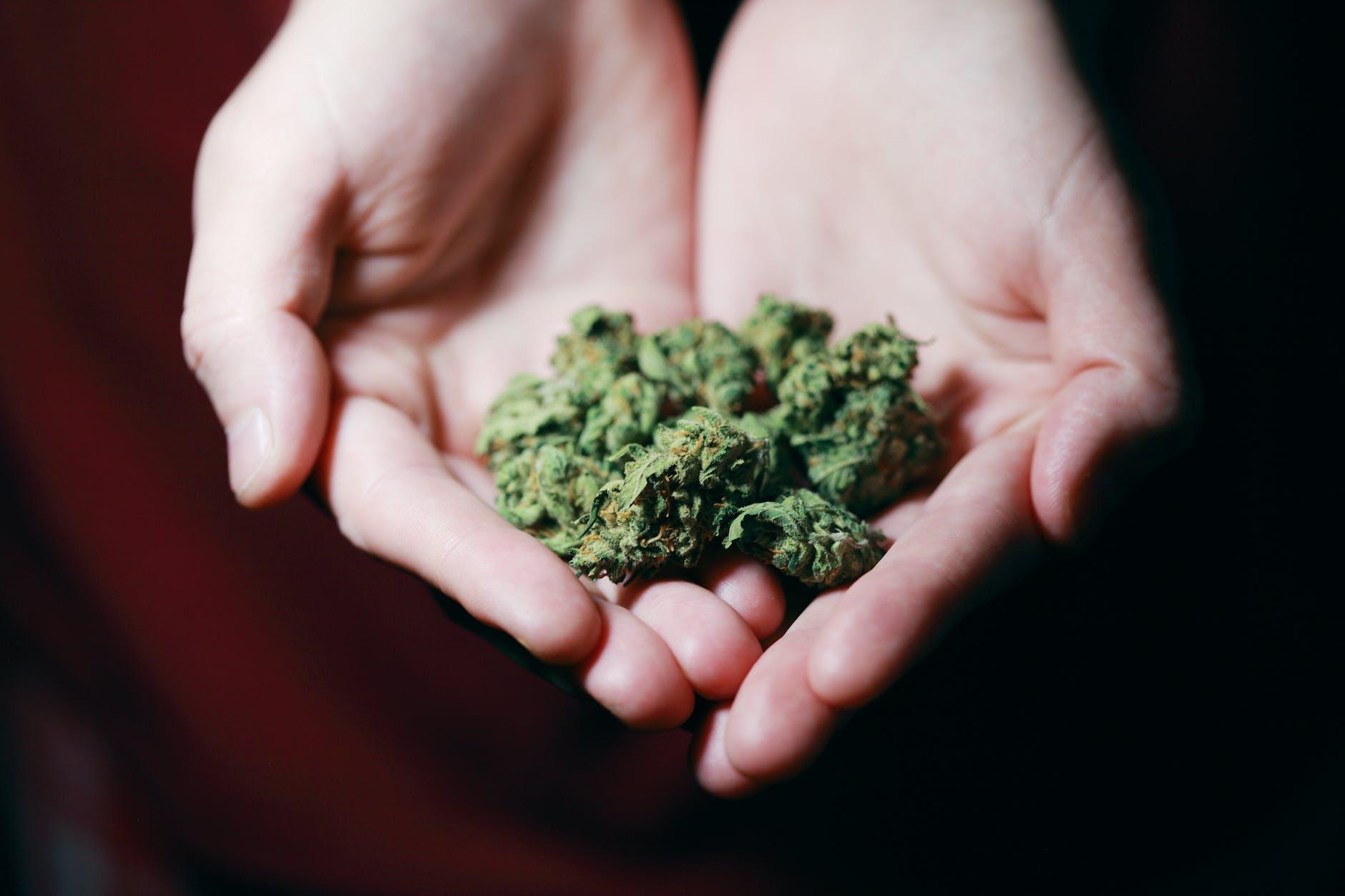 Cannabis for Gastrointestinal Disorders Works Wonder