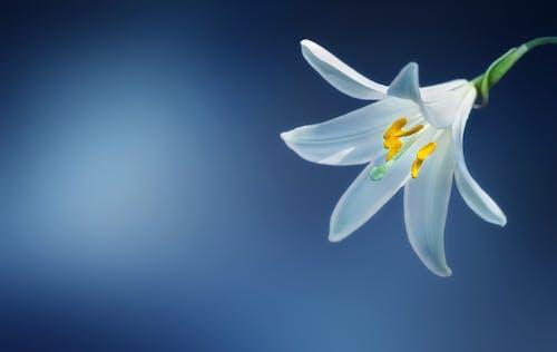 Kostnadsfri bild av blomma, blommig, blomning, botanik