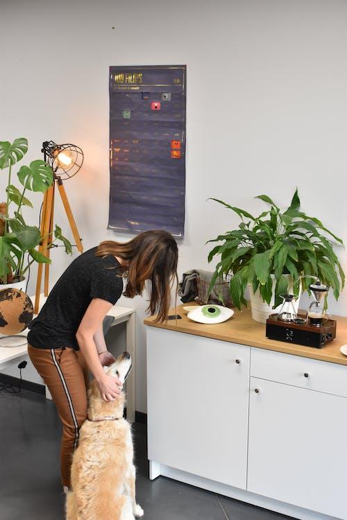 개, 래브라도, 식물의 무료 스톡 사진