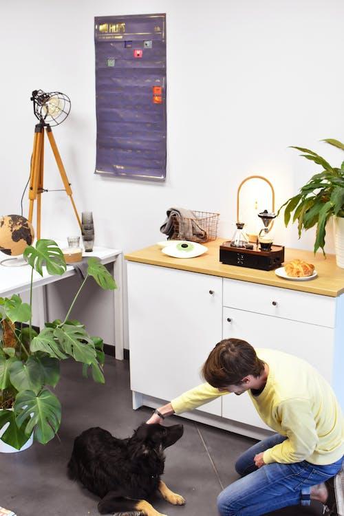 afiş, bitkiler, dünya içeren Ücretsiz stok fotoğraf