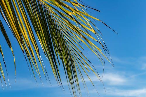 Imagine de stoc gratuită din cer albastru, exotic, frunză, frunza de palmier