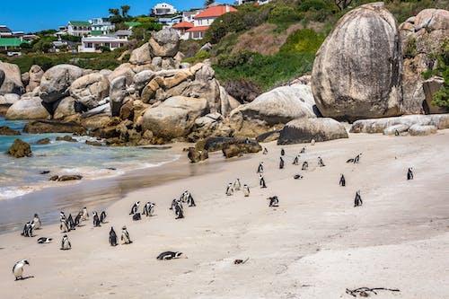Flock of Penguins on Shore Near Beach House