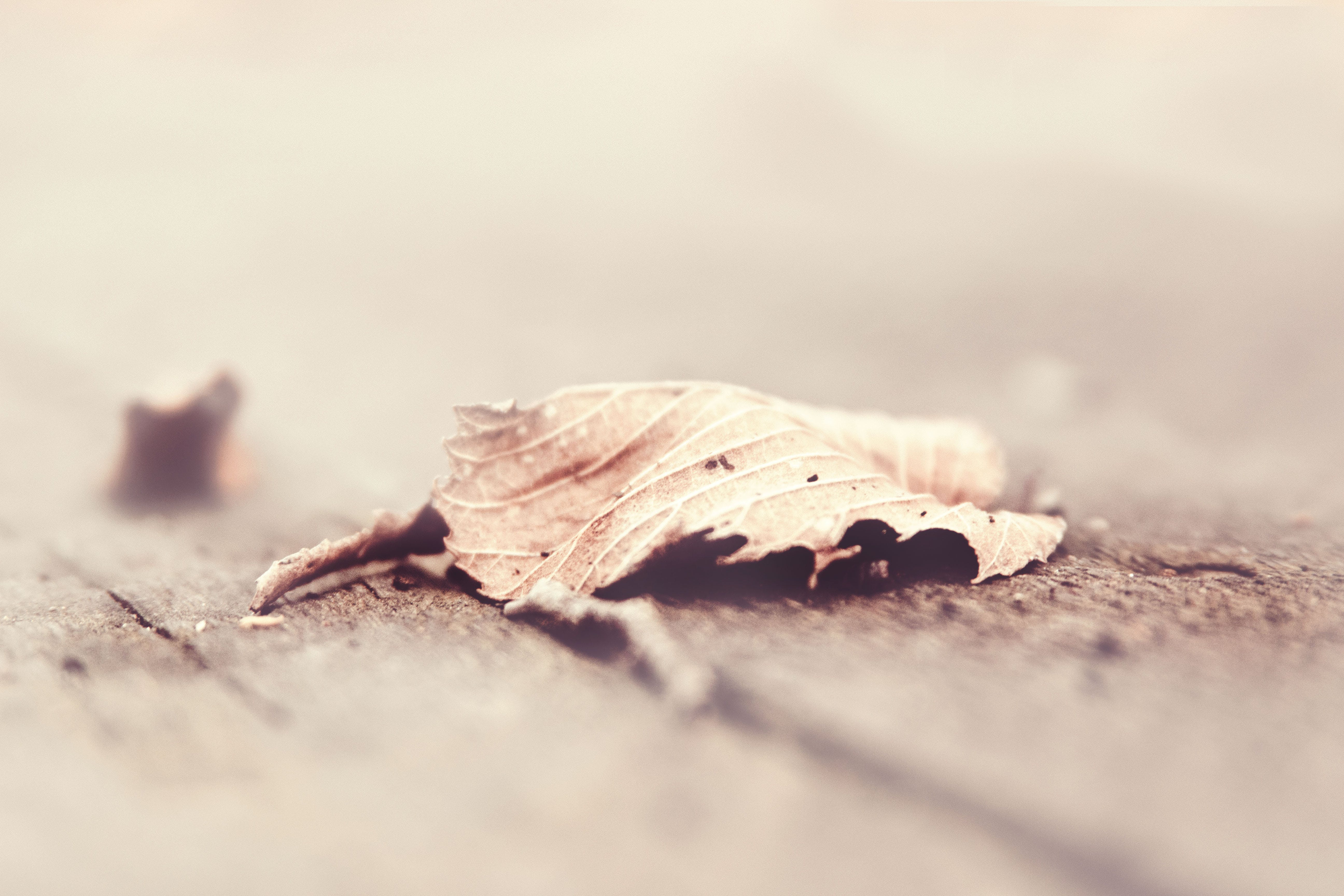 Free stock photo of nature, leaf, fall, outdoors